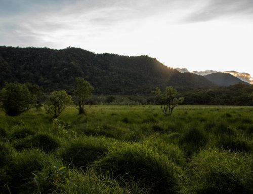 Ladeh Panjang Wetlands